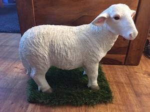 Gst lamb